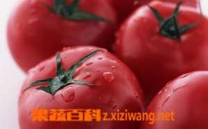 番茄受冰冻怎么办?番茄可以防癌吗